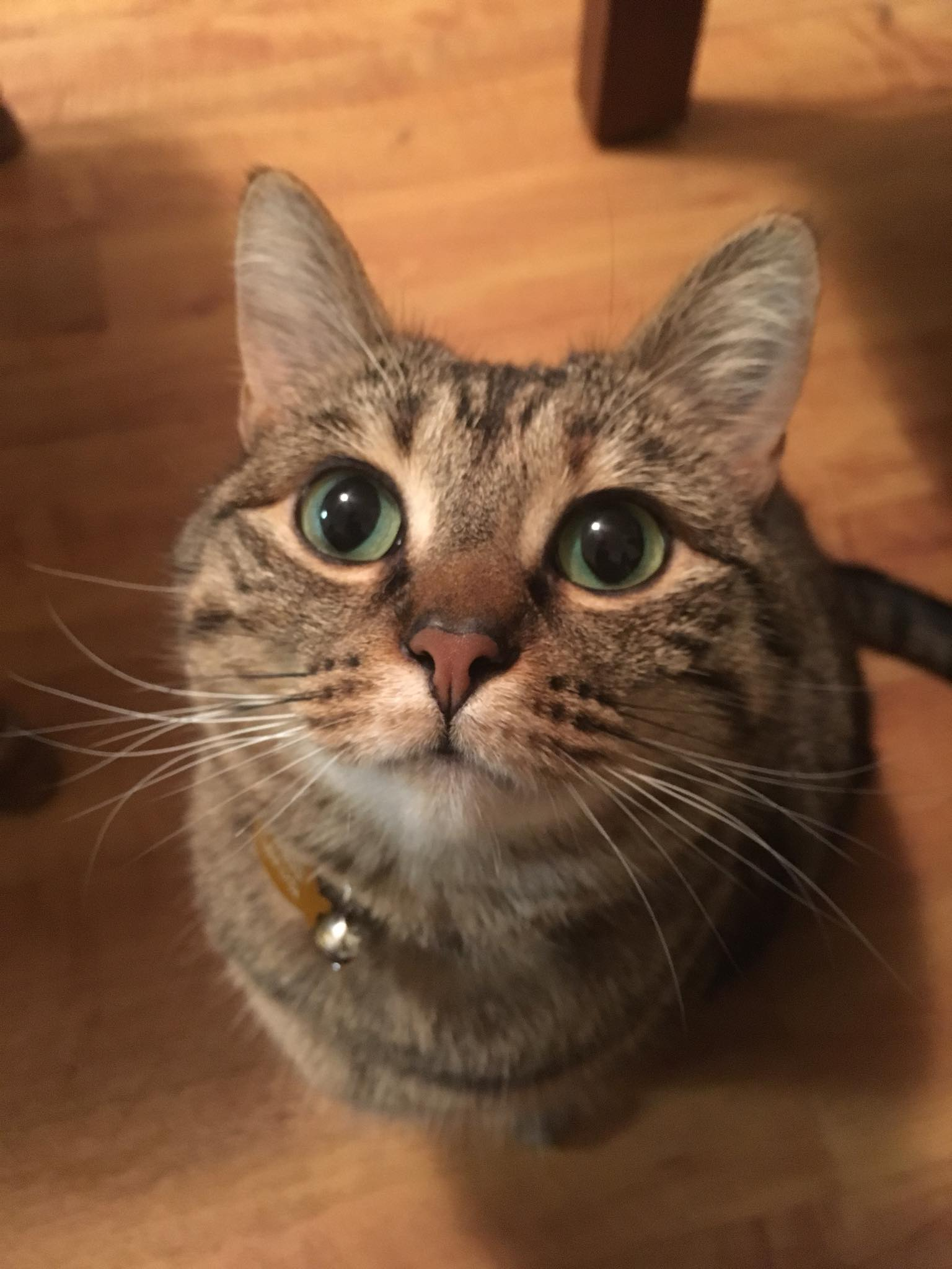 Explaining Autism: With Cats – Just Keep Stimming!